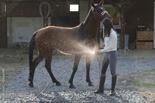 horse water bath