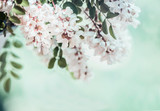 Close up of  beautiful acacia blossom on blurred nature background - 206672509