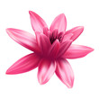 Lotus flower isolated on white background. - 206677749