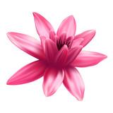 Lotus flower isolated on white background. - 206677749
