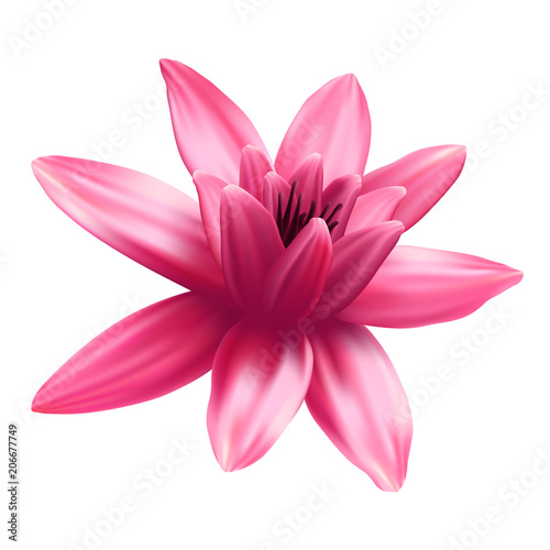 Wall mural Lotus flower isolated on white background.