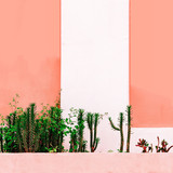 Plant on pink concept. Cactus Mix  in urban locations - 206679952