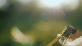 Close-up shot: Blowing on a dandelion flower. Slow motion video - 206712156