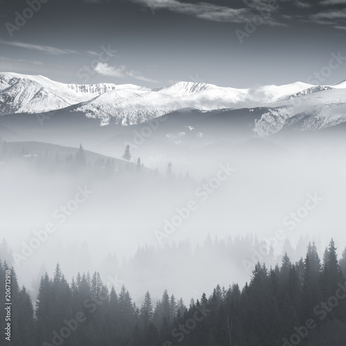 BW landscape with fog - 206712918