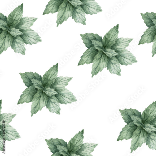 Aquarelle mint seamless pattern illustration. Watercolor mint color element fresh art on white background - 206723789