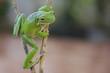 Pose Frog