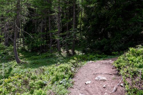 Aluminium Weg in bos Vallée de Chamonix