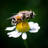 pollination at springtime - 206728912