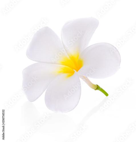 Fotobehang Plumeria plumeria flower on white background