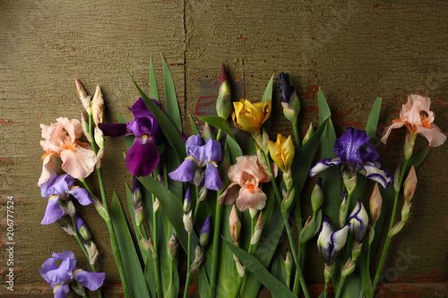 Aluminium Iris Vintage background with beautiful flowers