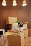 Moving House. Funny Dog On Box - 206786136