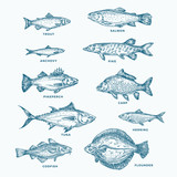 Hand Drawn Ocean or Sea and River Ten Fishes Set. A Collection of Salmon and Tuna or Pike and Anchovy, Herring, Trout, Carp Sketches Silhouettes. - 206799982
