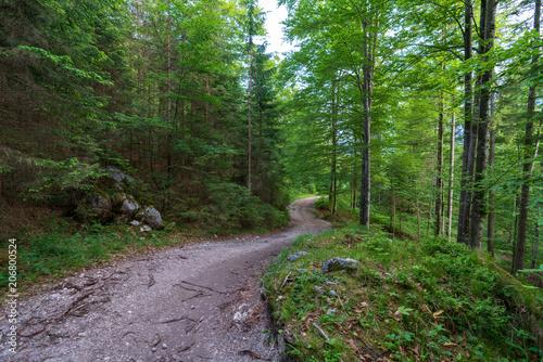 Aluminium Weg in bos Wald mit Wanderweg