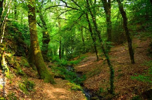Fotobehang Weg in bos sous bois
