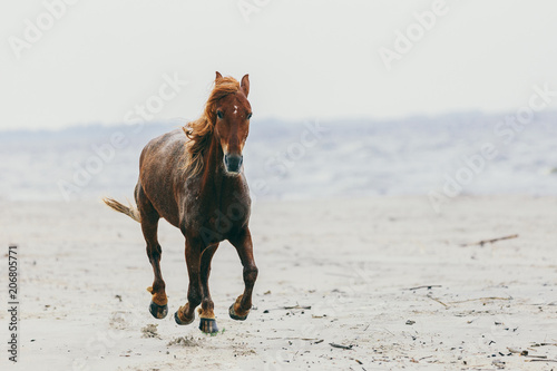 Fotobehang Paarden Lonely horse stepping on the sandy beach.
