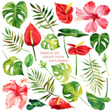 Floral set with tropical flowers and leaves. Watercolor elements for create your own design. - 206812523