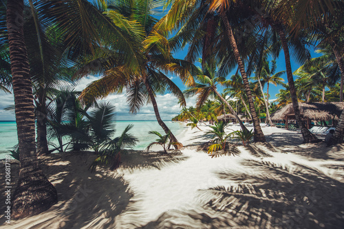 Palmtree and tropical beach in Caribbean sea