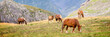 Herd of horses grazing near Pourtalet pass, Ossau valley in the Pyrenees, France