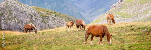 Fotobehang Paarden Herd of horses grazing near Pourtalet pass, Ossau valley in the Pyrenees, France