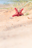 Summer beach in a tropical paradise with a  seashell and  starfish on golden sand. - 206818106