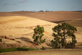 View over dry farm paddocks - 206826122