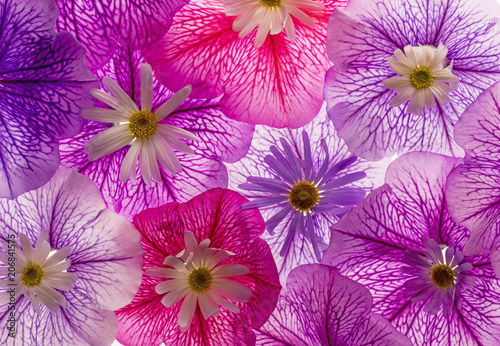 background from flower petals close up