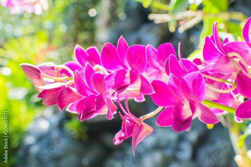 A Beautiful yellow and pink Orchids on a branch with blurry green leaf in the background - 206854771