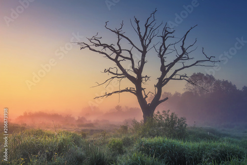 Fotobehang Baobab Landscape of wild nature with old tree in misty sunlight in early morning at dawn. Perfect nature at sunrise. Majestic large dry tree on meadow grass on warm summer blue clear sky background