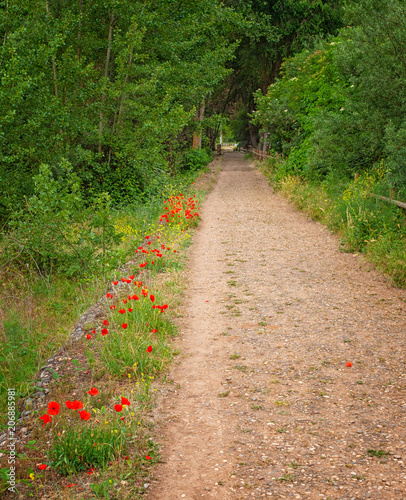Fotobehang Lente Pathway with poppy flowers