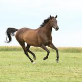 Amazing brown horse running alone - 206893554