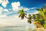 Beautiful palm trees on maldivian beach - 206896335