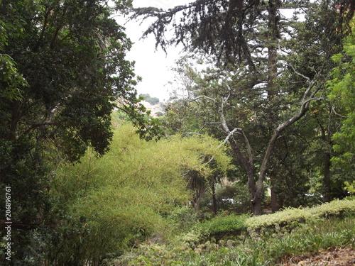 Canvas Khaki The Natural Landscape