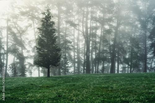 Fotobehang Lente Forest landscape and morning fog in spring