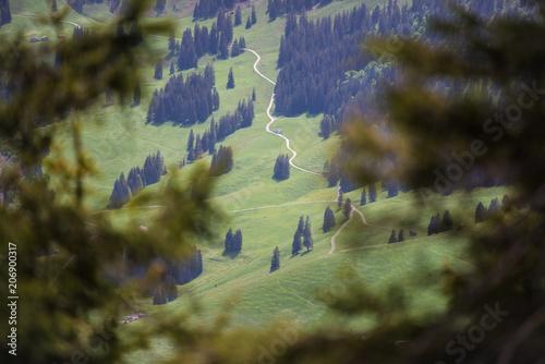 Fotobehang Olijf Landschaft