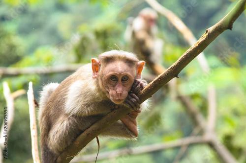 Fotobehang Aap Monkey on tree branch