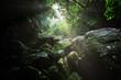 西表島のジャングル - 206908113