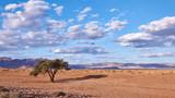 Namibian landscape with tree - 206916355