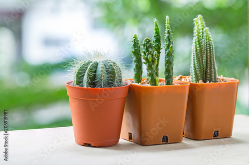 Cactus pots on wood table - 206919987