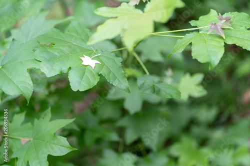 Fotobehang Olijf 植物