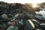 low tide tide pools exposed at sunset - 206939739