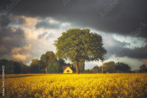 Fotobehang Grijs Rapeseed Farming No 2