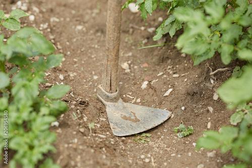 Hoe in the garden