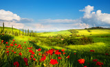 art italy countryside landscape with red poppy flowers and cypress trees on the  mountain path - 206976979