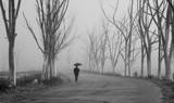 fuerte neblina en Epecuen - 206986774