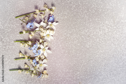Fotobehang Lelietjes van dalen White flowers ornithogalum and lily of the valley and blue forget me not in a row on a silver cement background as a frame with copy space for your holiday congratulations text on a greeting card