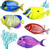 Set of marine fish isolated on white background - 206990105