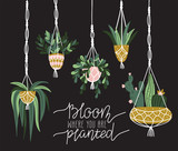 Macrame plant hangers in scandinavian interior. Vector stylish elements design. Card with lettering - 'Bloom where is you are planted' - 207003195