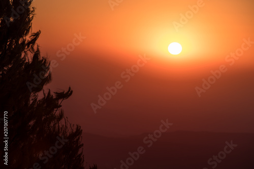 Fotobehang Oranje eclat Intense red orange sunrise above faintly visible hills, with a silhouetted fir tree at Gods Window in Mpumalanga, South Africa