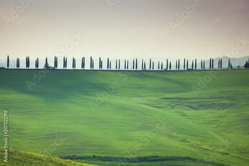 Fotobehang Olijf green summer landscape in tuscany, Italy