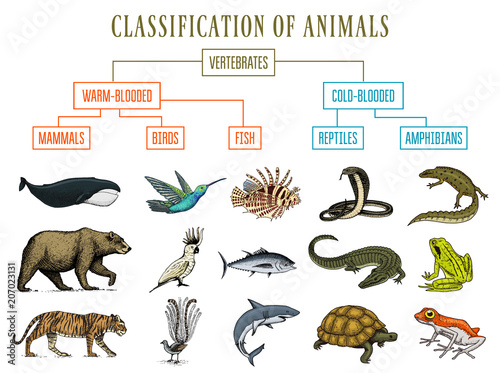 classification of animals  reptiles amphibians mammals birds  crocodile  fish bear tiger whale snake frog